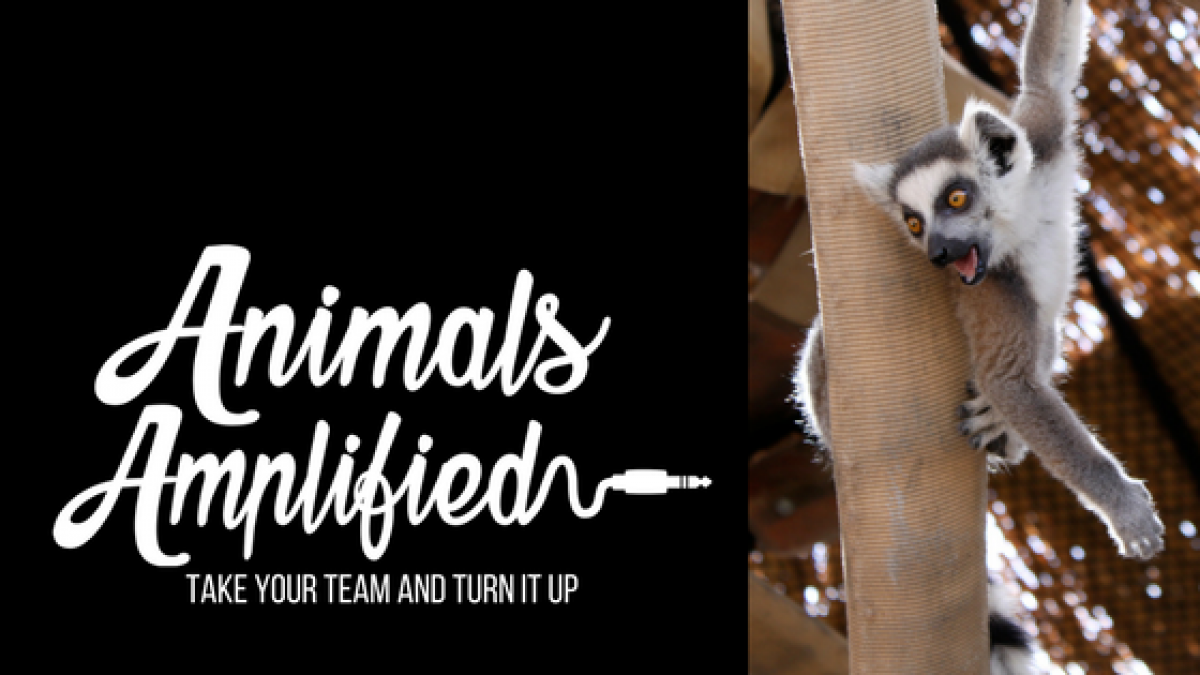 Animals Amplified