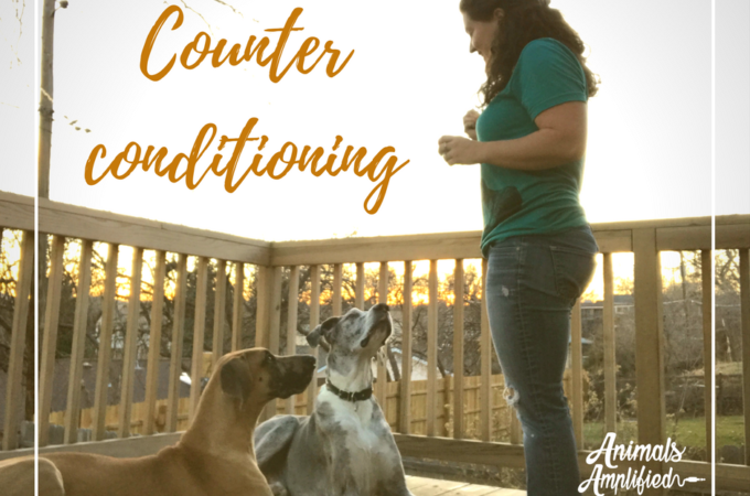Counter Conditioning