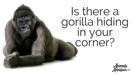 Is there a gorilla hiding in your corner?