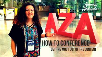 How to Conference