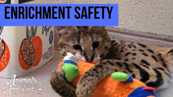Enrichment Safety