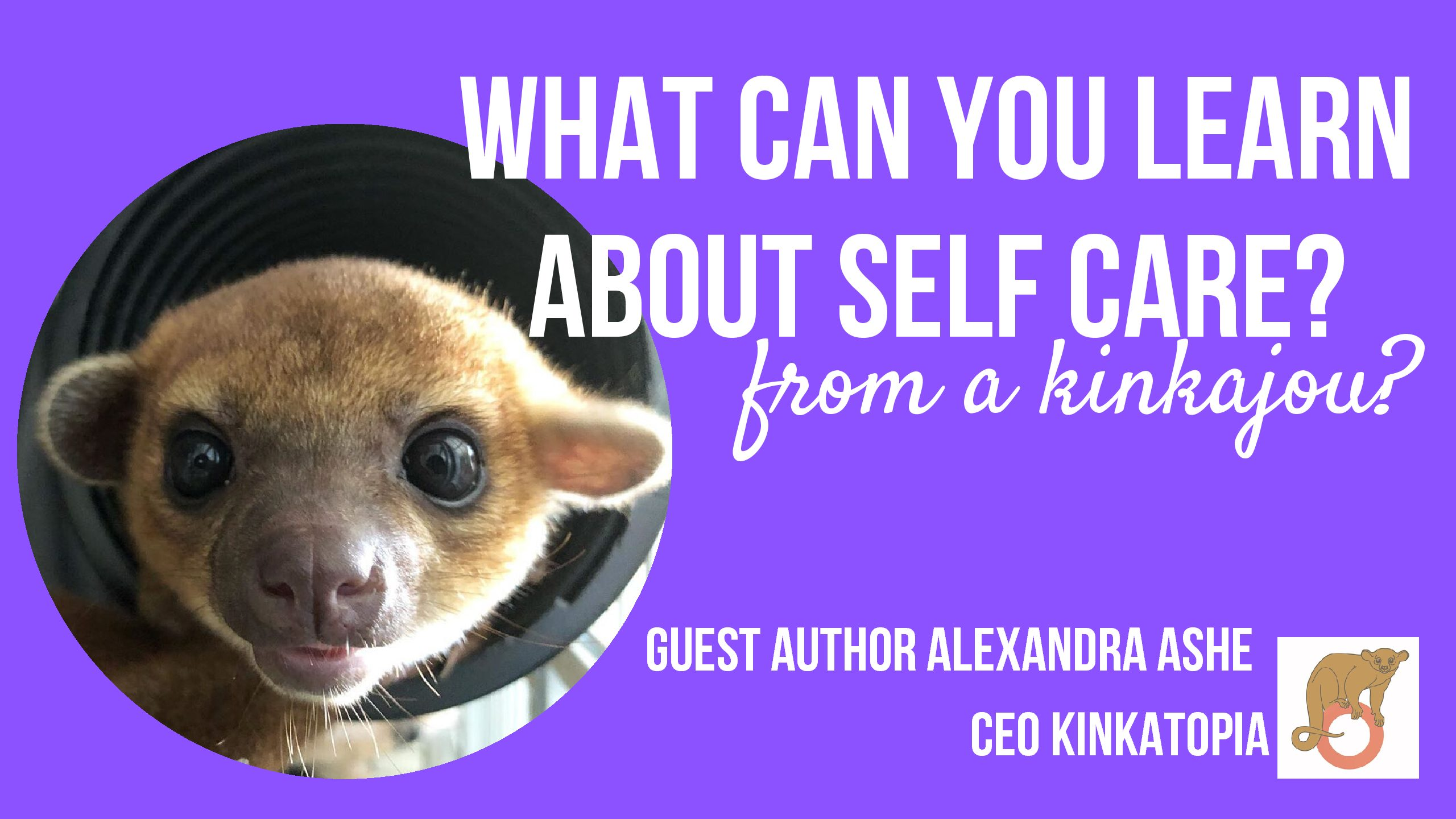 What can you learn about self care from a kinkajou?