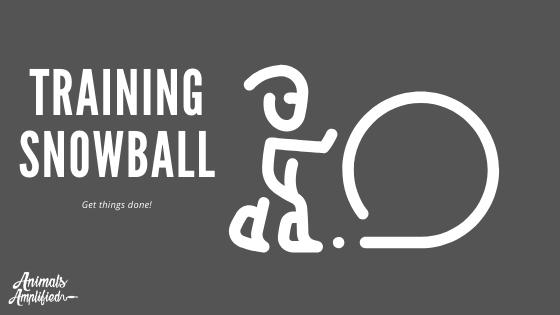 training snowball